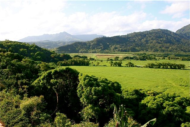 Hanalei Valley / buffalo pasture 1