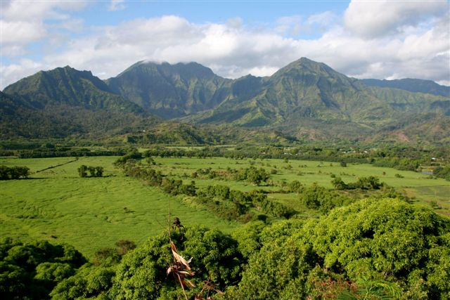 Hanalei Valley /         buffalo pasture 2